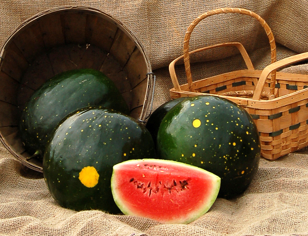 Organic Moon & Stars Watermelon, Citrullus lanatus