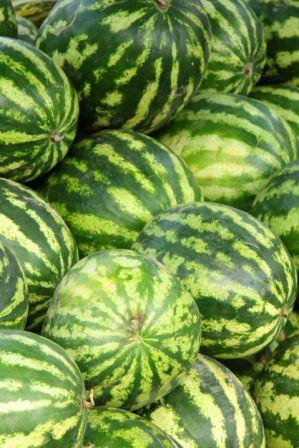 Organic Crimson Sweet Watermelon, Citrullus lanatus