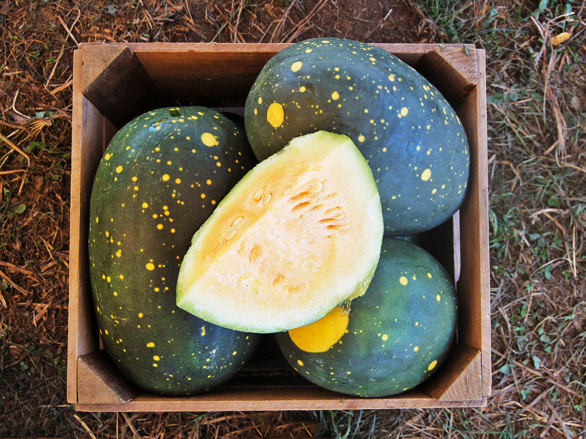 Organic Yellow Moon & Stars Watermelon Citrullus landaus