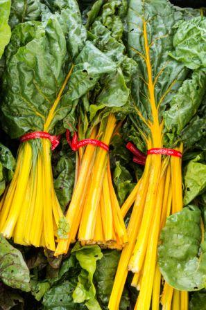 Organic Golden Chard, Beta vulgaris